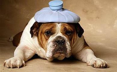 Via libera allo scontrino parlante anche per le spese veterinarie detraibili
