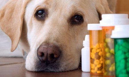 L'accesso dei cani in farmacia – QUESITO